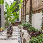 Garden project overhaul by Outside Noosa