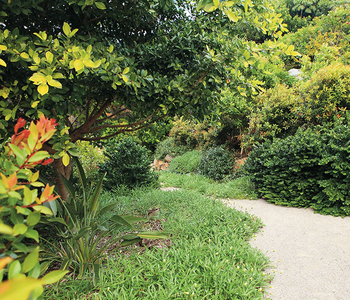 Outside Noosa garden design