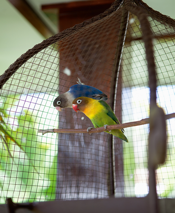 Tropical love birds Bali home
