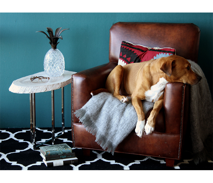 eco chic, dog, lounge room