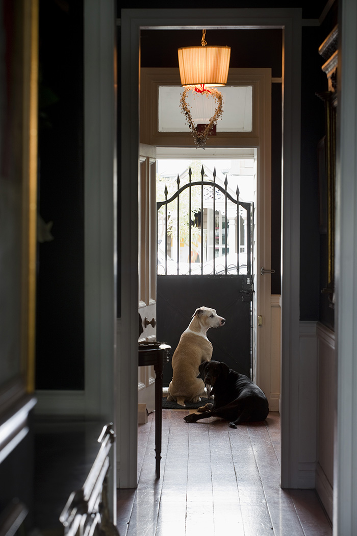 Dogs at the front door