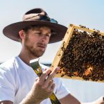 The story behind the neighbourhood honey of Bee One Third