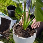 Choose the right topsoil or garden soil to watch your plants grow
